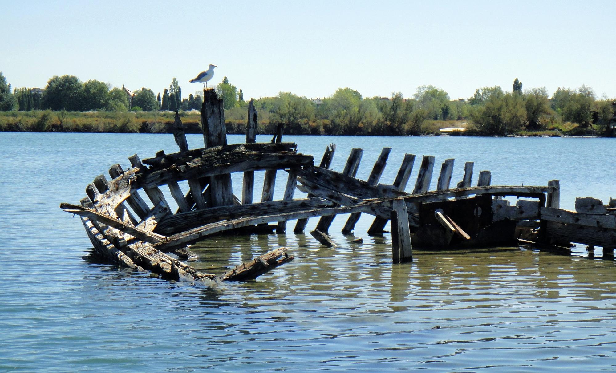 laguna; trabacolo; trabaccolo; laguna di Grado; Friuli Venezia Giulia;